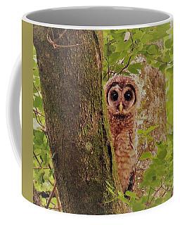 Barred Owlet Coffee Mug