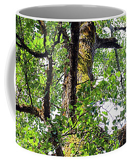 Coffee Mug featuring the photograph Basking In The Light Of The Lord by Tikvah's Hope