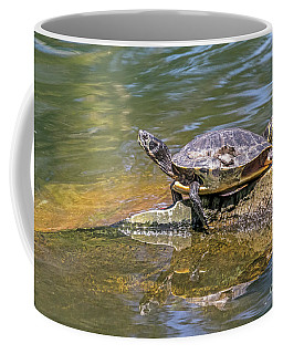 Coffee Mug featuring the photograph Basking by Kate Brown