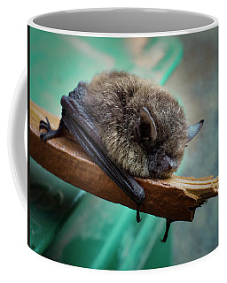 Coffee Mug featuring the photograph Bat Rehoused by Jean Noren