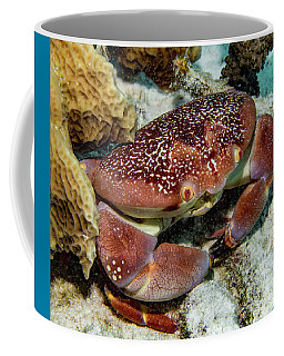 Batwing Coral Crab Coffee Mug