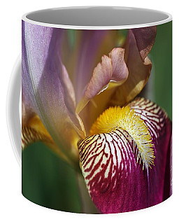 Bearded Iris Flower Mary Todd Coffee Mug