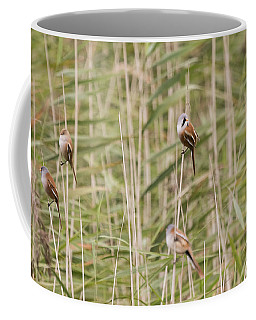 Bearded Reedlings Family Outing Coffee Mug