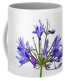 Beautiful Agapanthus Flower - The Blue Trumpets Are Perfectly Lit By Natural Daylight Coffee Mug