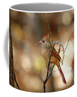 Coffee Mug featuring the photograph Beautiful Female Cardinal by Darren Fisher