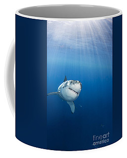 Beautiful Great White Coffee Mug