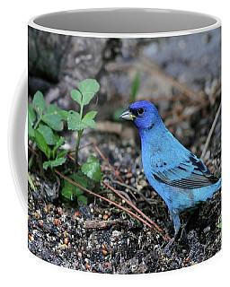 Beautiful Indigo Bunting Coffee Mug