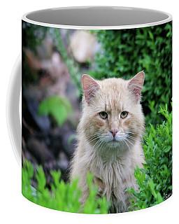 Coffee Mug featuring the photograph Beautiful Kitty by Trina Ansel