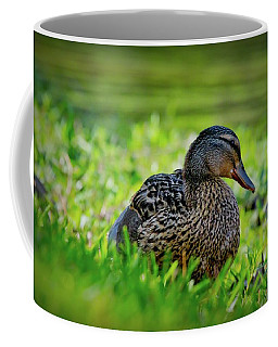 Coffee Mug featuring the photograph Beautiful Mama Duck by Linda Unger