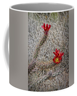 Coffee Mug featuring the photograph Cholla's In The Desert by Elaine Malott