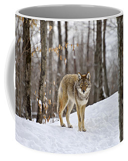 Beauty Of The Woods Coffee Mug