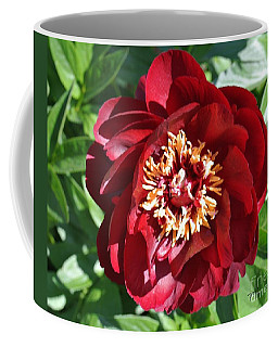 Beauty Peony Bloom Coffee Mug by Marsha Heiken