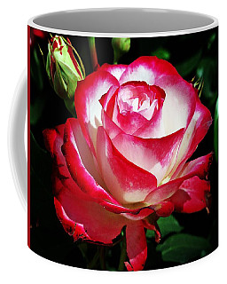 Coffee Mug featuring the photograph Beauty Rose by Joseph Frank Baraba