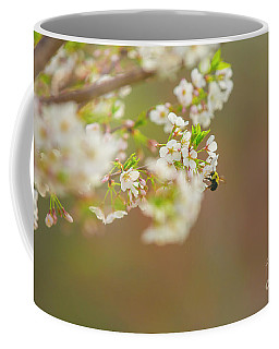 Bee On A Cherry Blossom Coffee Mug