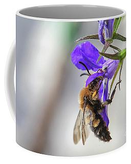 Bee On Purple Flower Coffee Mug by Patricia Hofmeester