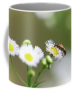 Beetle Daisy Coffee Mug