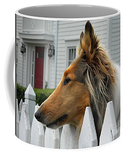 Coffee Mug featuring the photograph Bellingham Collie by Rosanne Licciardi