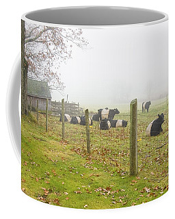 Belted Galloway Cows Farm Rockport Maine Photograph Coffee Mug