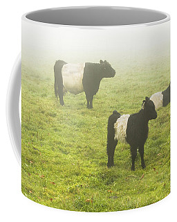 Belted Galloway Cows Grazing  In Foggy Farm Field Maine Coffee Mug