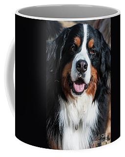 Bernese Mountain Dog Portrait  Coffee Mug by Gary Whitton