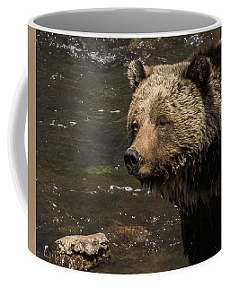 Beryl Springs Sow In The River Coffee Mug by Yeates Photography