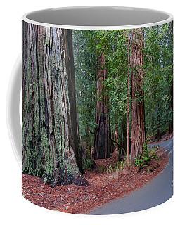 Big Basin Redwoods Coffee Mug