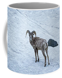 Big Horn Sheep  Coffee Mug