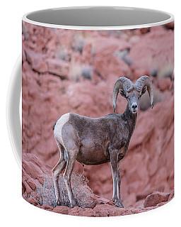 Big Horn Sheep Valley Of Fire Coffee Mug