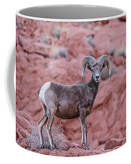 Big Horn Sheep Valley Of Fire Coffee Mug