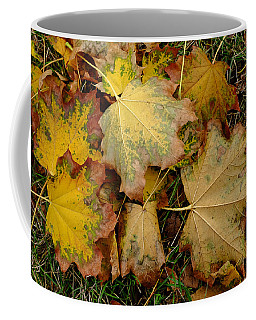 Coffee Mug featuring the photograph Big Leaf Maple Leaves In Early Fall by Monte Stevens