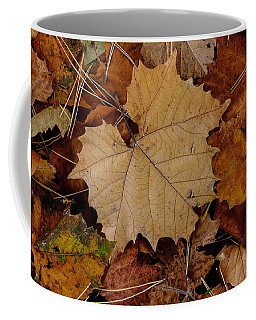 Coffee Mug featuring the photograph Big Leaf Maple by Monte Stevens
