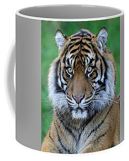 Coffee Mug featuring the photograph Big Stare by Steve McKinzie
