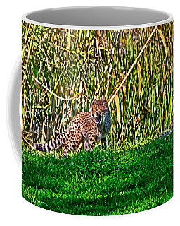 Big Yawn By Little Cub Coffee Mug by Miroslava Jurcik