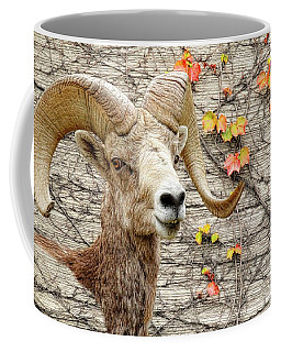 Coffee Mug featuring the photograph Bighorn Canvas by Steve McKinzie