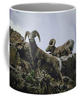 Coffee Mug featuring the photograph Bighorn Pair by Jason Coward