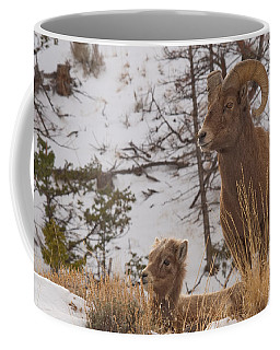 Bighorn Ram And Kid Coffee Mug