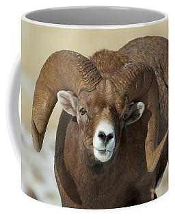Bighorn Ram In Montana Coffee Mug