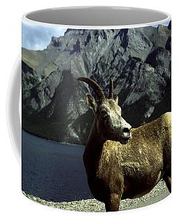 Bighorn Sheep Coffee Mug by Sally Weigand