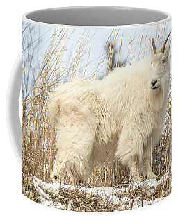 Billy Goat At Sundown Coffee Mug by Yeates Photography