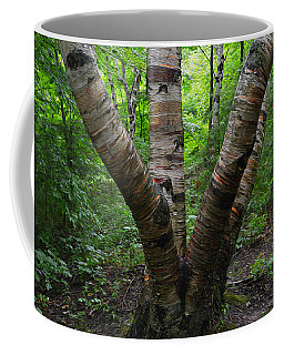 Coffee Mug featuring the photograph Birch Bark Tree Trunks by SimplyCMB