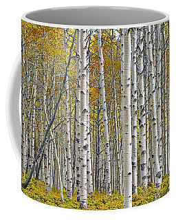 Birch Tree Grove With A Touch Of Yellow Color Coffee Mug