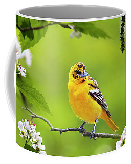 Bird And Blooms - Baltimore Oriole Coffee Mug