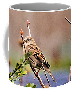 Bird In The Cold Coffee Mug