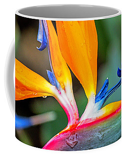 Bird Of Paradise After The Rain Coffee Mug