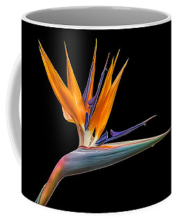 Bird Of Paradise Flower On Black Coffee Mug