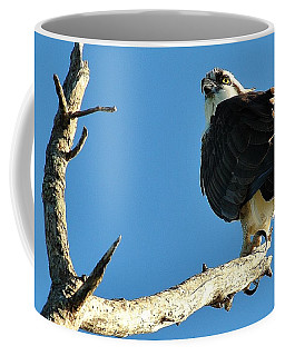 Birds 10 17 Coffee Mug