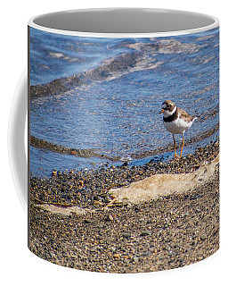 Coffee Mug featuring the photograph Birds Of Maine by Trace Kittrell