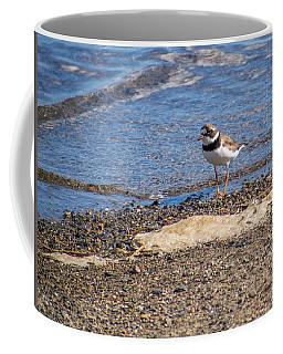 Birds Of Maine Coffee Mug