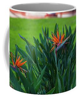 Birds Of Paradise, Vistoria Falls Hotel Coffee Mug