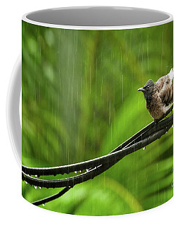 Birds Of Sri Lanka  Pycnonotus Cafer Coffee Mug